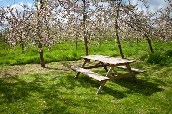aire de camping-car les bruyères carré moyaux calvados normandie