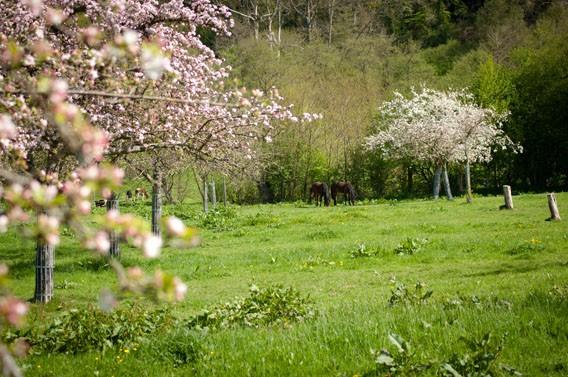 chevaux gîte les bruyères carré moyaux calvados normandie