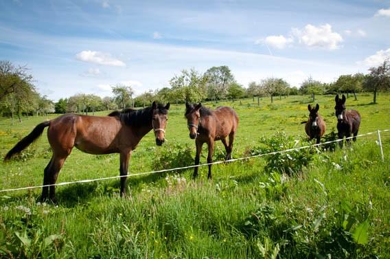 chevaux ânes gîte les bruyères carré moyaux calvados normandie