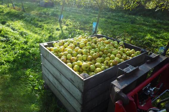 vergers pommes les bruyères carré moyaux calvados normandie
