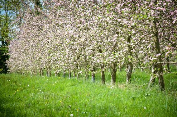 vergers pommiers les bruyères carré moyaux calvados normandie