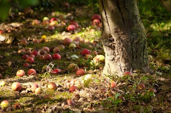 pommes calvados vergers bruyères carré moyaux normandie