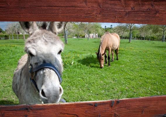 âne cheval bruyères carré moyaux
