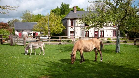passion chevaux bruyères carré calvados normandie