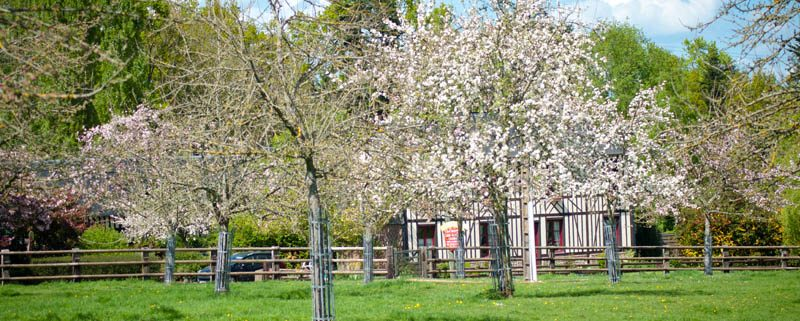 bruyères carré moyaux pommiers fleurs calvados normandie-1