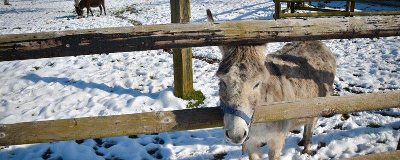 hiver foire aux ânes moyaux