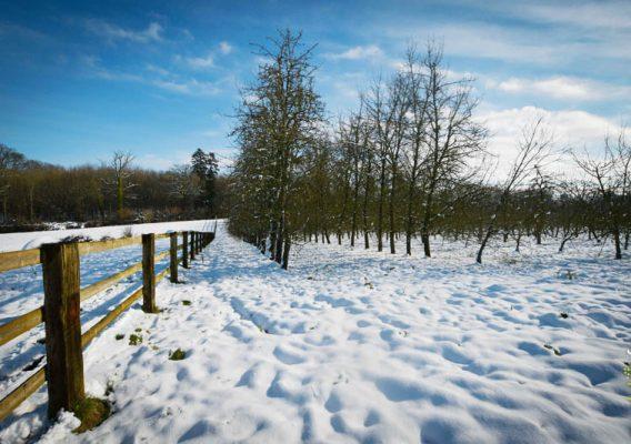 neige poiriers normandie