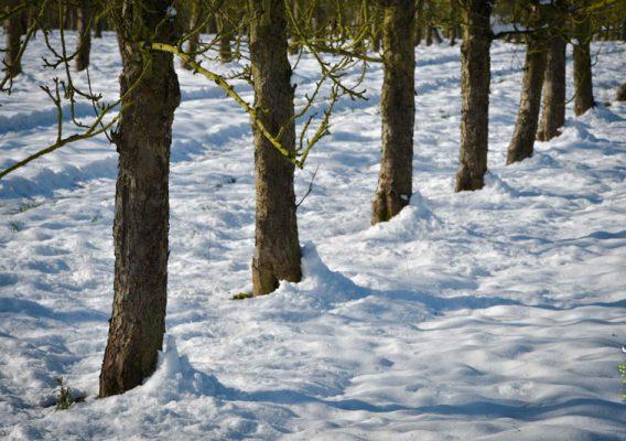 neige pommiers normandie