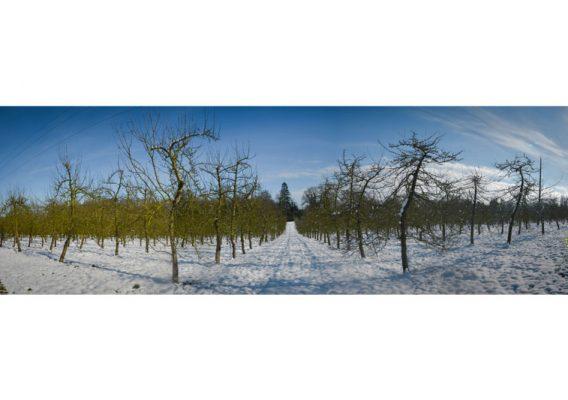 neige vergers pommiers normandie