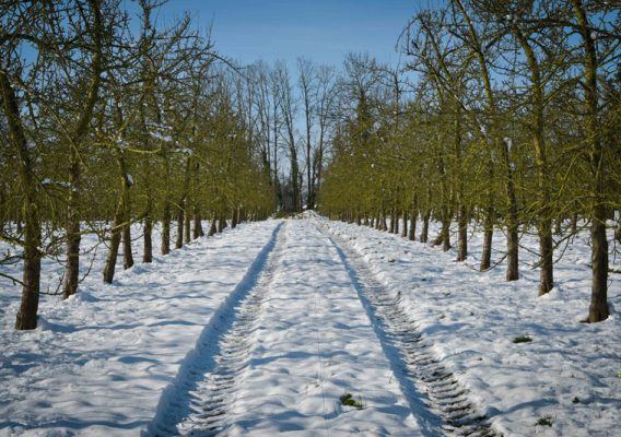 pommiers vergers calvados neige hiver